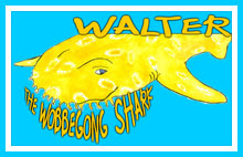Walter The Wobbegong